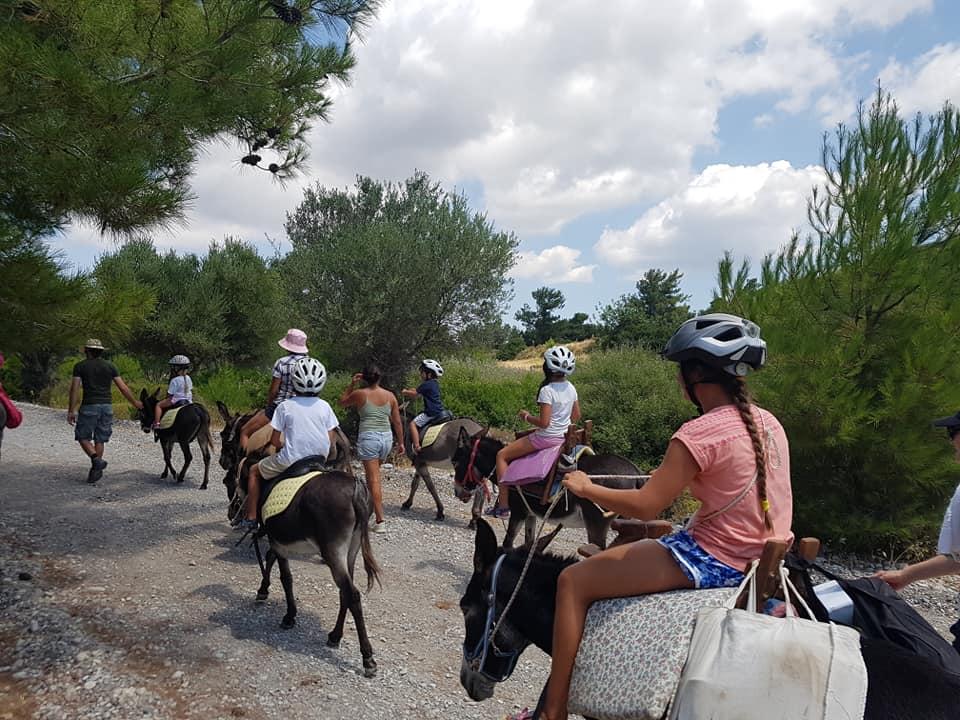 Activité à Rhodes: balade en ânes rhodes