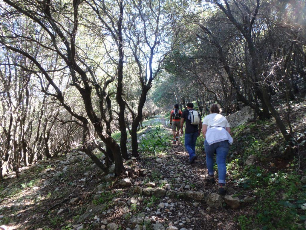 Randonnée dans les forêts du Mont Profitis Ilias à Rhodes